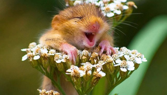 38 доказательств того, что животные умеют улыбаться (Фото)