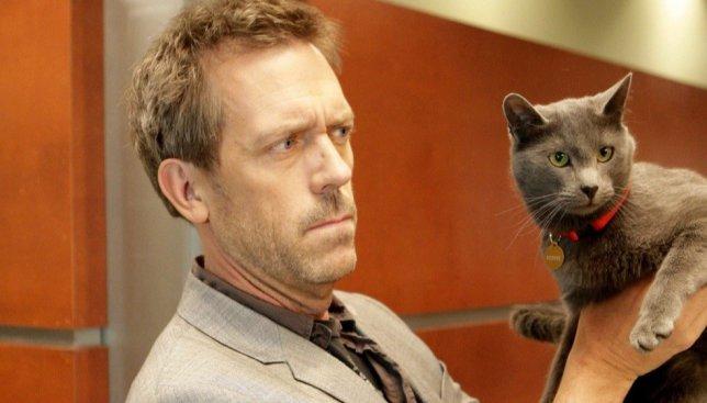 22 фотографии котиков, которым повезло сфотографироваться со знаменитостями
