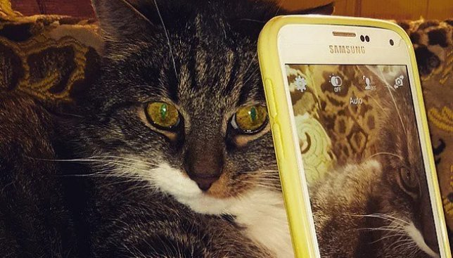 12 веселых кошек с типично девичьими привычками и поведением
