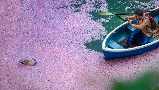 Когда зацвела сакура: волшебство японских пейзажей в это время года (Фото)