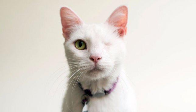 Нововведение в Америке: как слепым котикам с помощью фотосессий питаются найти дом (Фото)