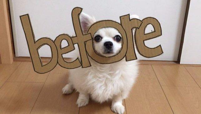 30 смешных фотографий собаки, хозяйка которой придумала ему множество костюмов на Хэллоуин