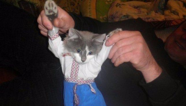 Ко дню вышиванки: коты и собаки, хозяева которых также решили их принарядить (Фото)