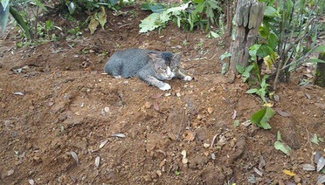 Кот-Хатико: как на самом деле домашние животные переживают уход своих хозяев (Фото)
