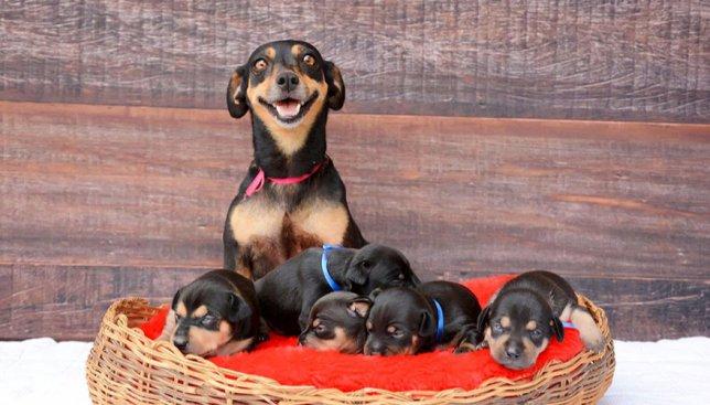 Фотосессия для собаки: веселая пародия на многодетную маму (Фото)