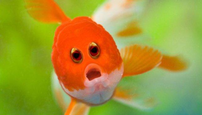 """21 смешная фотография животных, которым """"прифотошопили"""" глаза как у людей"""