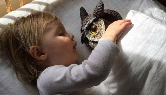 Необычная дружба: девочка не расстается со своей совой ни на минуту (Фото)