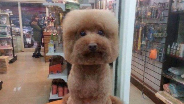 Новый безумный тренд для собак: сделай со своего любимца квадрат