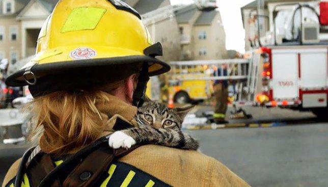 Сегодня день девяти жизней: спасатели, которые подарили животным второй шанс на жизнь (Фото)