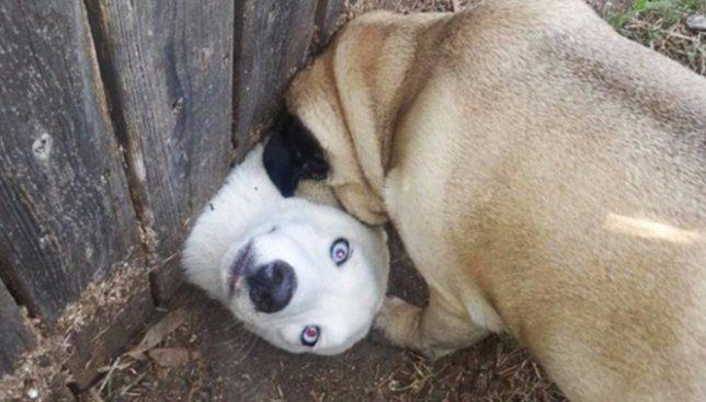 20 фотографий собак, которые попали в неловкие ситуации