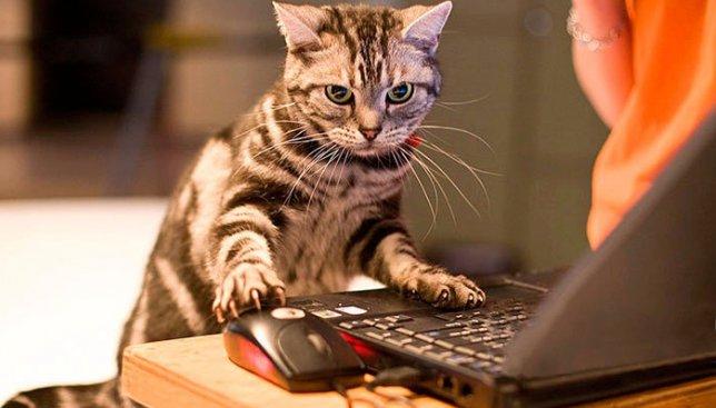 15 иллюстраций, которые показывают, как изменилась жизнь котов с прогрессом технологий