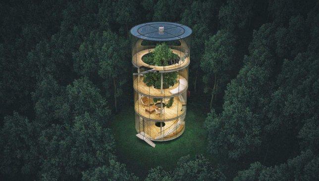 Дом, построенный вокруг дерева: жилье, которое позволяет сохранить природу