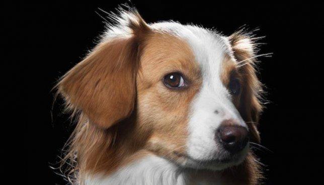 Характеры животных в их взгляде: что на самом деле думают о нас любимцы (Фото)