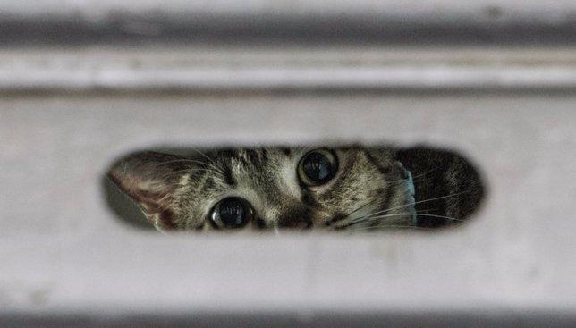 44 фотографии из жизни уличных котов в Гонконге