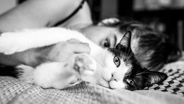 24 фотографии сильной и независимой: как это - жить с четырьмя котами