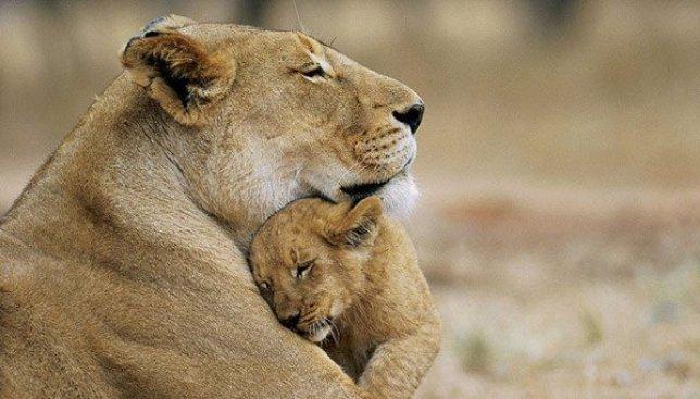 8 фотографий, которые доказывают проявление любви у животных