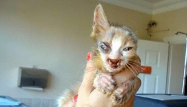 Желание жить: как спасали маленького и очень больного котенка (Фото)