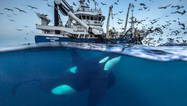 26 фотографий китов в открытом море, от которых у вас перехватит дыхание