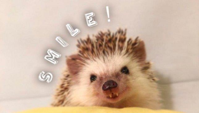Новая звезда instagram: маленький ежик с зубками, как у вампира (Фото)