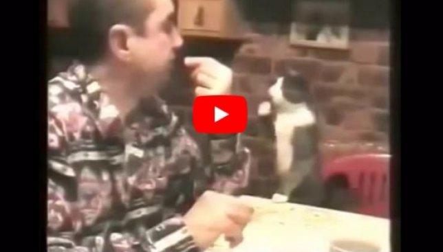 Случай на миллион: кот общается с глухонемым хозяином жестами (Видео)