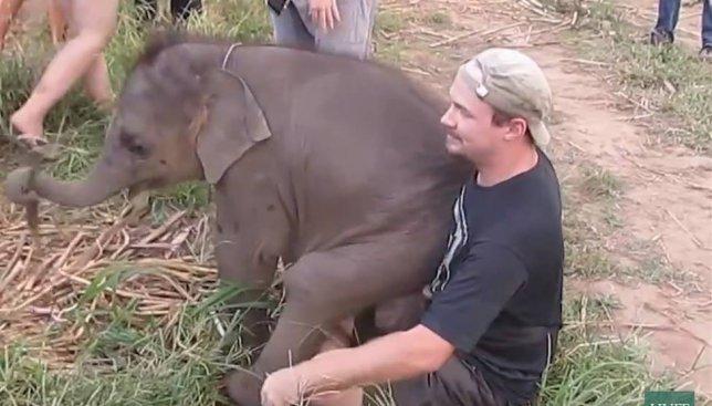 Слоники, которые хотят обниматься, покоряют интернет