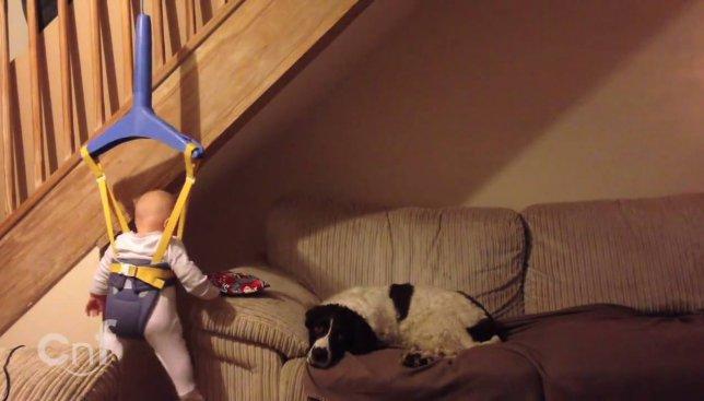 Забавное видео: в каких целях отец использует ребенка, когда мамы нет дома