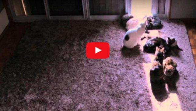 Немного солнца каждому: как коты реагируют на первые лучи тепла (Видео)