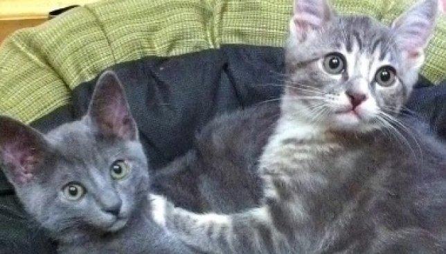 Сегодня всемирный день доброты: видео о человеке, который держит дома 18 котов