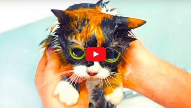 7 простых лайфхаков для того, чтобы сделать вашу с котом жизнь проще (Видео)