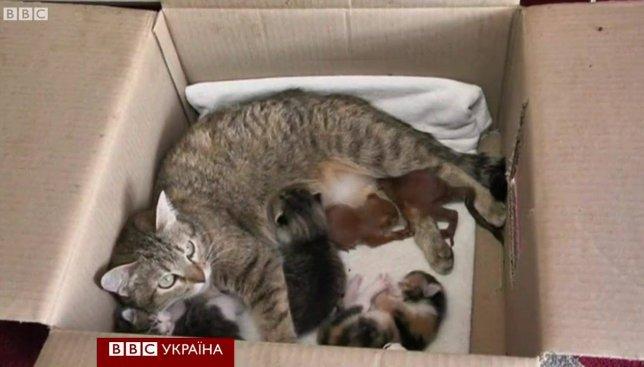 Курьезная новость: кошка по имени Белка стала матерью для белочек (Видео)