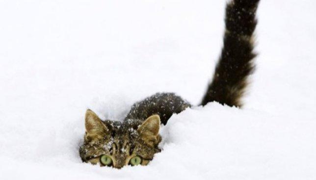 Скоро на всех улицах столицы ожидают снежный бум, как в этом видео