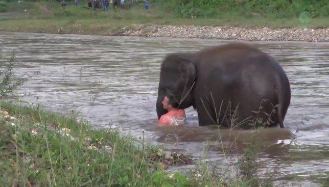 Видео о реакции слона на тонущего человека произвело фурор в сети