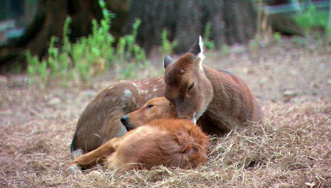 Такие разные, но вместе: видео, которое доказывает, что животные умеют испытывать чувства