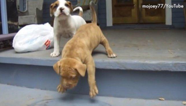 Смешное видео: как собаки преодолевают жизненные препятствия