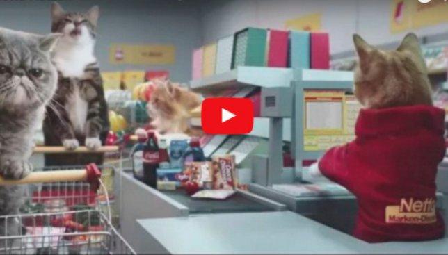 Веселое видео: как кошки захватили немецкий супермаркет