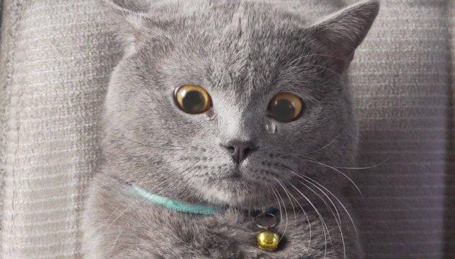 Если бы коты умели снимать веселые видео, это было бы примерно так