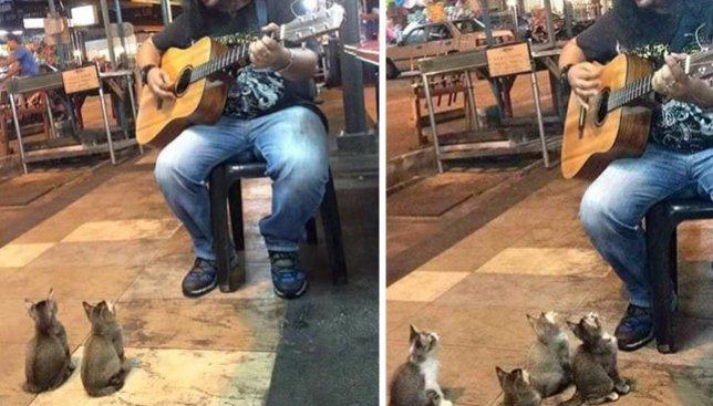 Видео с уличным музыкантом и его необычными слушателями покорило сеть