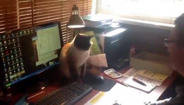 Веселое видео: кот, который отучает от компьютерной зависимости