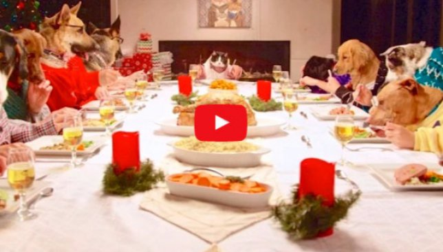 Если бы домашние животные жили как люди, их Рождество проходило бы именно так