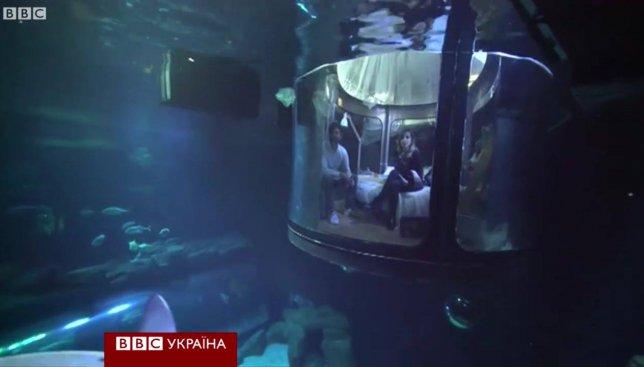 Развлечение с акулами: каждый может бесплатно пожить с ними в одной комнате (Видео)