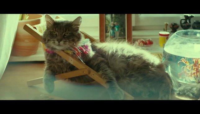 Пока Вас нет дома: как коты отмечают приход весны