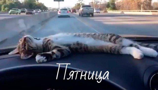 Пятница: коты отдыхают (Видео)