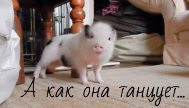 Видео с танцующей тверк свинкой поднимает настроение на весь день