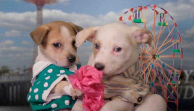 Как бы выглядели фильмы, номинированные на Оскар, со щенками в главной роли (Видео)