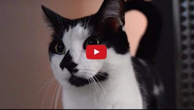 Исследование: как ведут себя кошки в отсутствие хозяев (Видео)