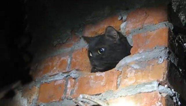 Вчера в Киеве тяжким трудом спасли двух котов из вентиляционных шахт (Видео)