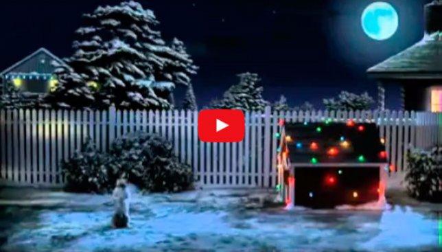 Как пес подготовился к празднику и ждет Деда Мороза: новогоднее видео