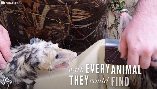 Братья, которые спасают каждое найденное животное от смерти, сняли потрясающее мотивационное видео