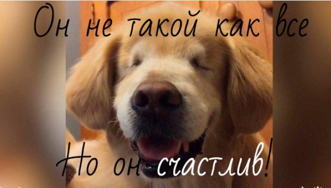 Слепой пес, который всегда улыбается, покорил сеть