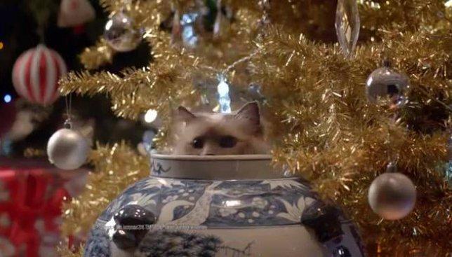 Сегодня день домашних животных: милое рождественское видео о котиках покорило всех